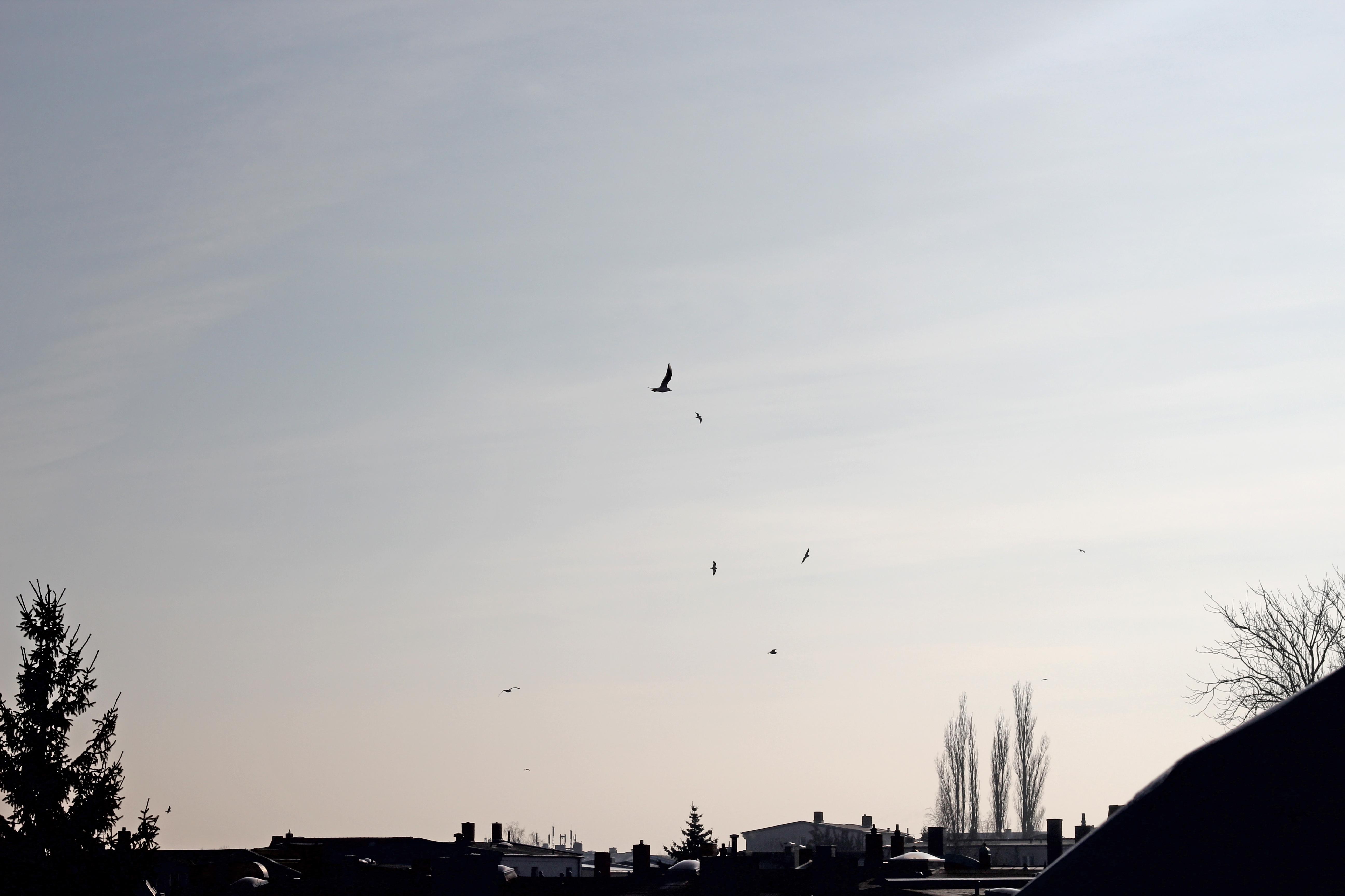 View Schwerin